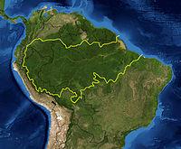 AMAZON ORMALARI