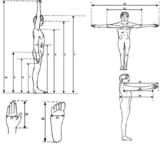 antropometri 1