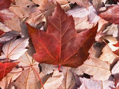 Kanada Orman Ürünleri Sanayi