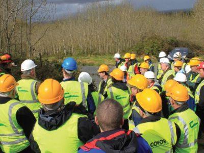 İrlanda'da Ağaçlandırma Artışı Hedefleniyor