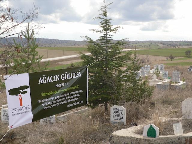 mezarlık ağaçlandırma (2)