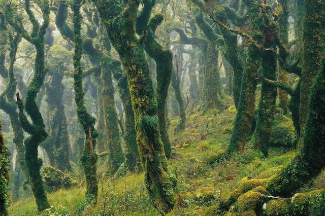 NZB ENI Gobin Forest