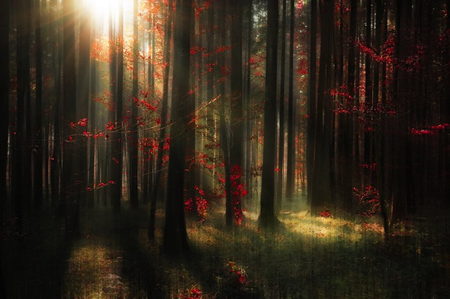 Germany, Baden Wuerttemberg, View of autumn forest